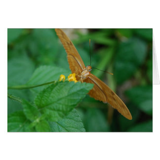 Julia Butterfly Greeting Cards