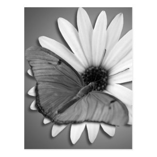 Julia Butterfly on Daisy Post Cards