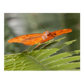 Julia butterfly on leaf postcard