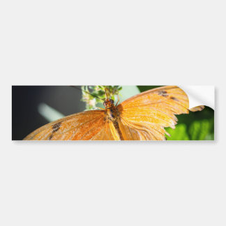 Julia Heliconian Dryas Julia Bumper Sticker