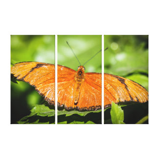 Julia Heliconian Dryas Julia Canvas Print