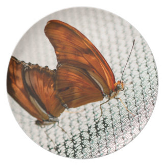 Julia Heliconian Dryas Julia Party Plates