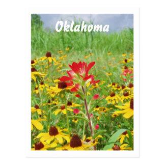 july2007 indian paintbursh, Oklahoma Postcard