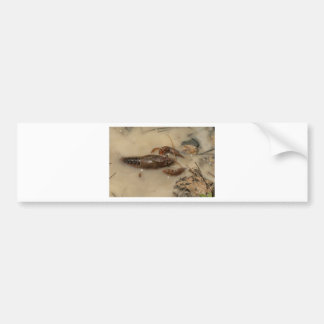 Jumbo Alabama Crawdaddy Crustaceans Bumper Sticker