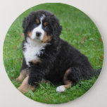 "Jumbo custom photo pet pin, love your dog! button<br><div class=""desc"">This 6 inch jumbo pin / button can be customized with any photograph. Got a favorite pet? Share him/her with the world!
