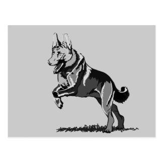 Jump shepherd dog post cards