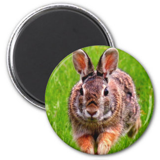 Jumping Bunny - Magnet