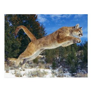 Jumping Cougar Postales