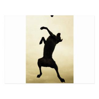 Jumping dog postcard