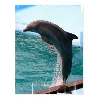 Jumping Dolphin Postcard