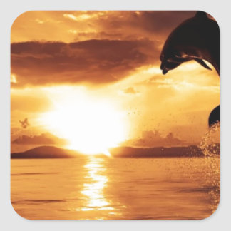 jumping dolphin with beautiful sunset over the sea square sticker