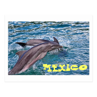 Jumping Dolphins Mexico Postcards