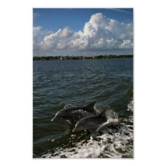 Jumping Dolphins Poster