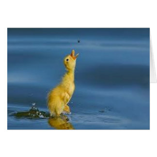 Jumping Duckling Card