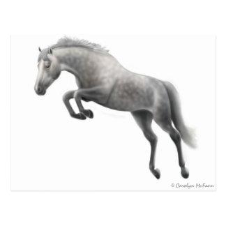 Jumping Gray Horse Postcard