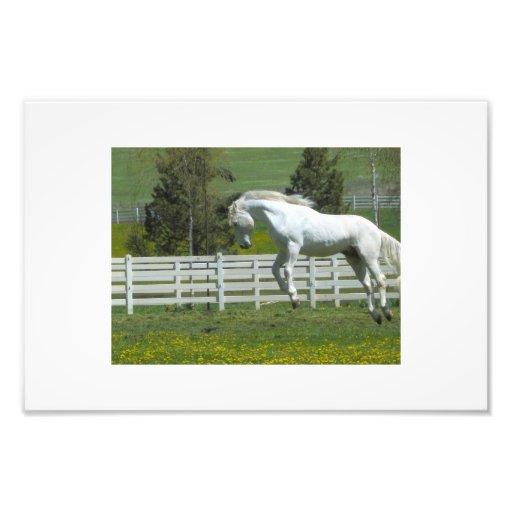 Jumping Horse Photo Art