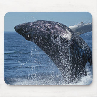 Jumping Humpback Whale Mouse Pad