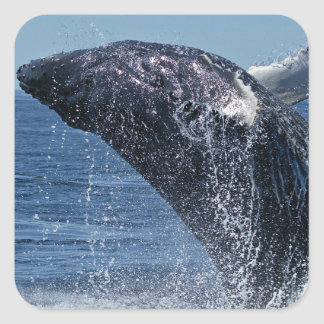 Jumping Humpback Whale Stickers