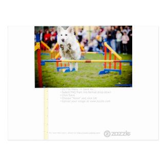 Jumping Hurdle Dog Postcard