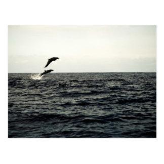 Jumping Ocean Dolphins PostCard
