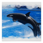 Jumping Orca Whale Posters