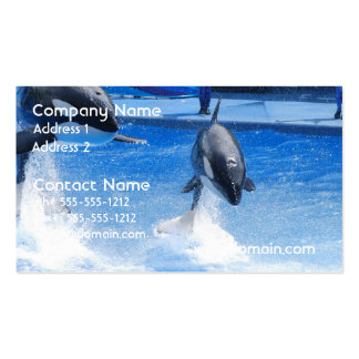 Jumping Orcas Business Card