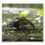 jumping spider art photo