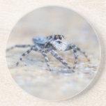 Jumping Spider Beverage Coaster