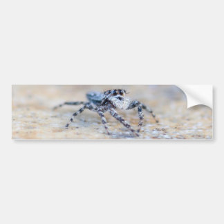 Jumping Spider Bumper Stickers