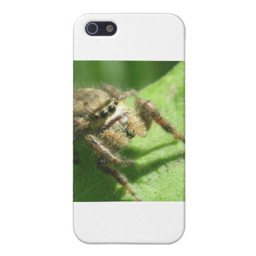 Jumping Spider Case For iPhone 5