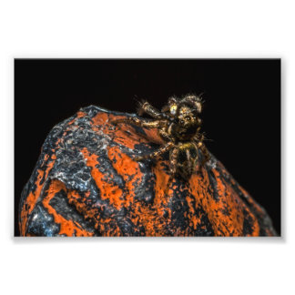 Jumping Spider Looking Up At The Sky Photo Print