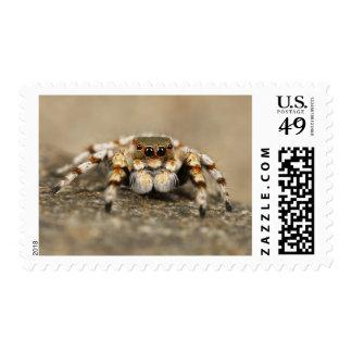 Jumping Spider Postage Stamp