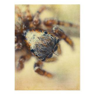 Jumping Spider Postcard