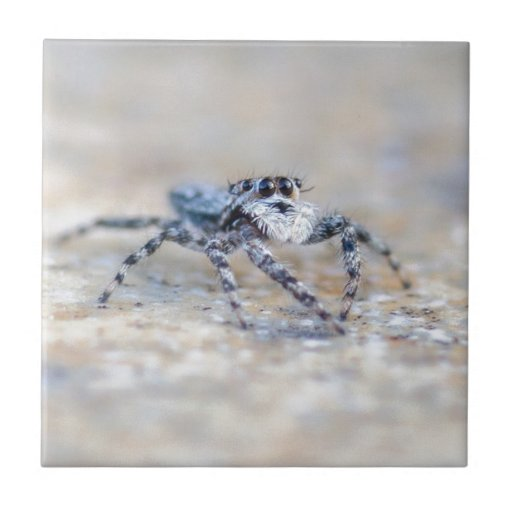 Jumping Spider Small Square Tile