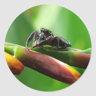 Jumping spider round sticker