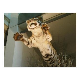 Jumping tiger - look at his paws postcards