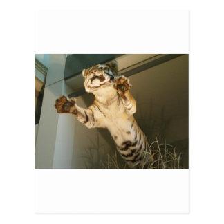 Jumping tiger - look at his paws post cards