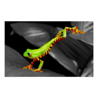 Jumping Tree Frog Posters