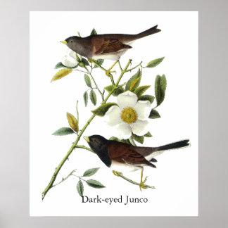 Junco Oscuro-observado - John James Audubon Poster