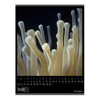 june 2010 calendar postcard