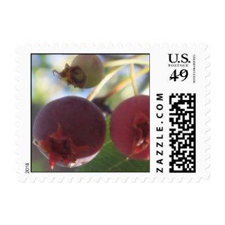 June Berries in July Postage