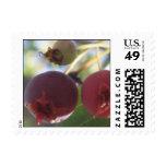 June Berries in July Stamp