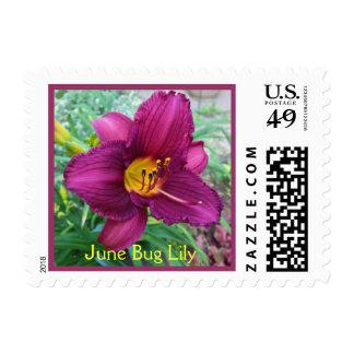 June Bug Lily Postage Stamp