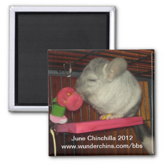 June chinchilla 2012 magnet