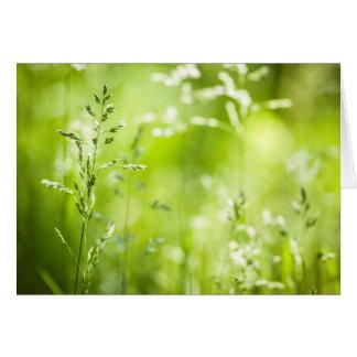 June green grass flowering greeting card