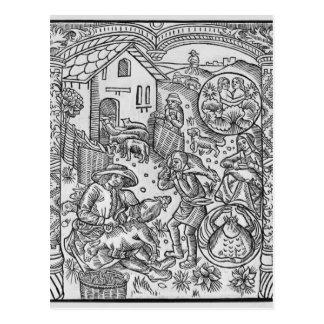 June, sheep shearing, Gemini Postcard