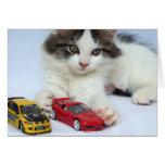 June Wild Kitten Cards