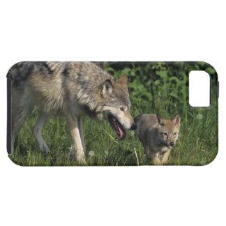 Jungem Welpen del mit de Wolfmutter iPhone 5 Carcasas