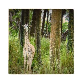 Jungle Baby Wood Coaster