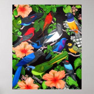 Jungle Birds of Mexico Poster